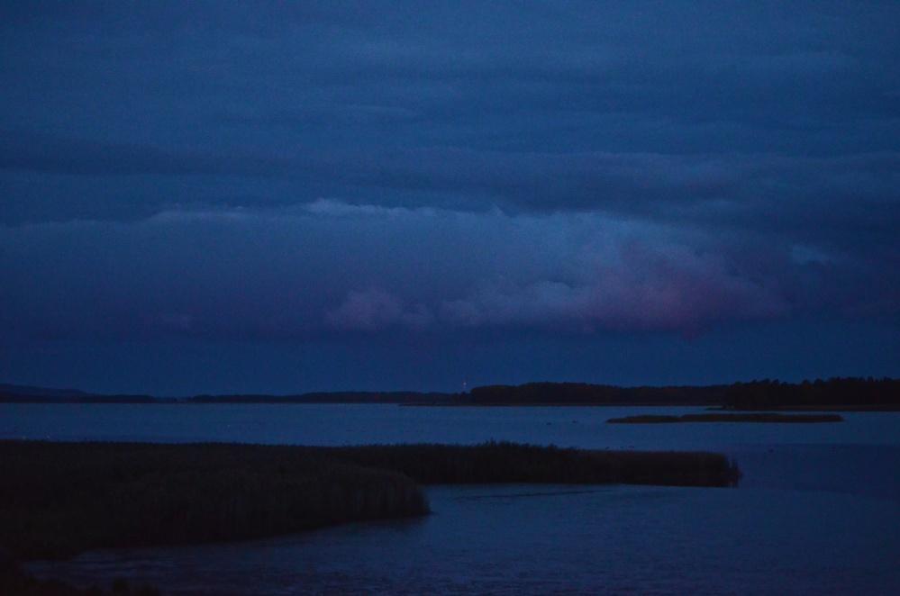 Gäss och andra fåglar vid sjön Tåkern i Östergötland (1/6)
