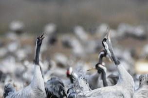Close-Cranes