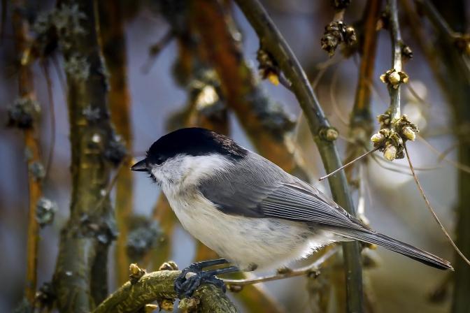 Vårens fåglar
