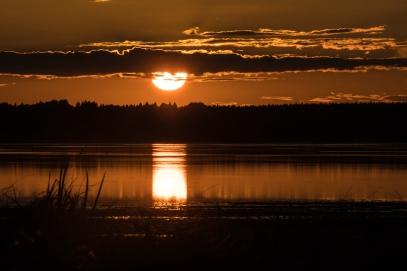 Hornborgasjön-4
