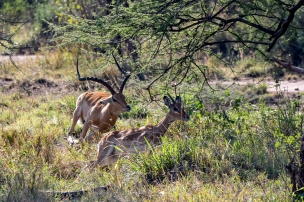 Serengeti49