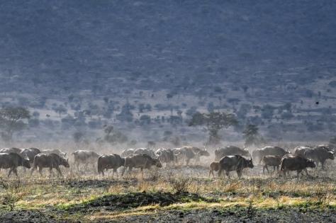 Serengeti58