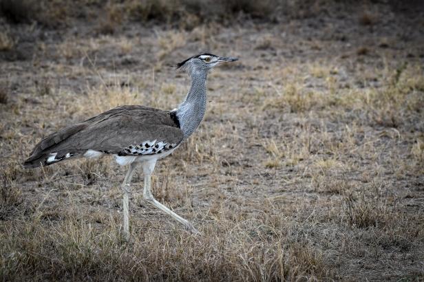 Serengeti67